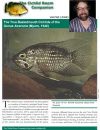The True Basketmouth Cichlids of the Genus Acaronia (Myers, 1940)