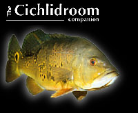 The Cichlid Room Companion